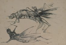 Grasmann-Insetos-Desenho